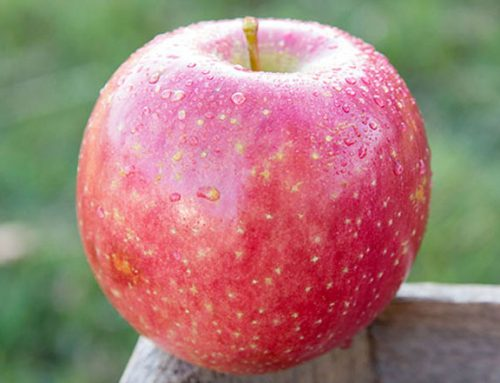 Varieties from the Midwest Apple Improvement Association